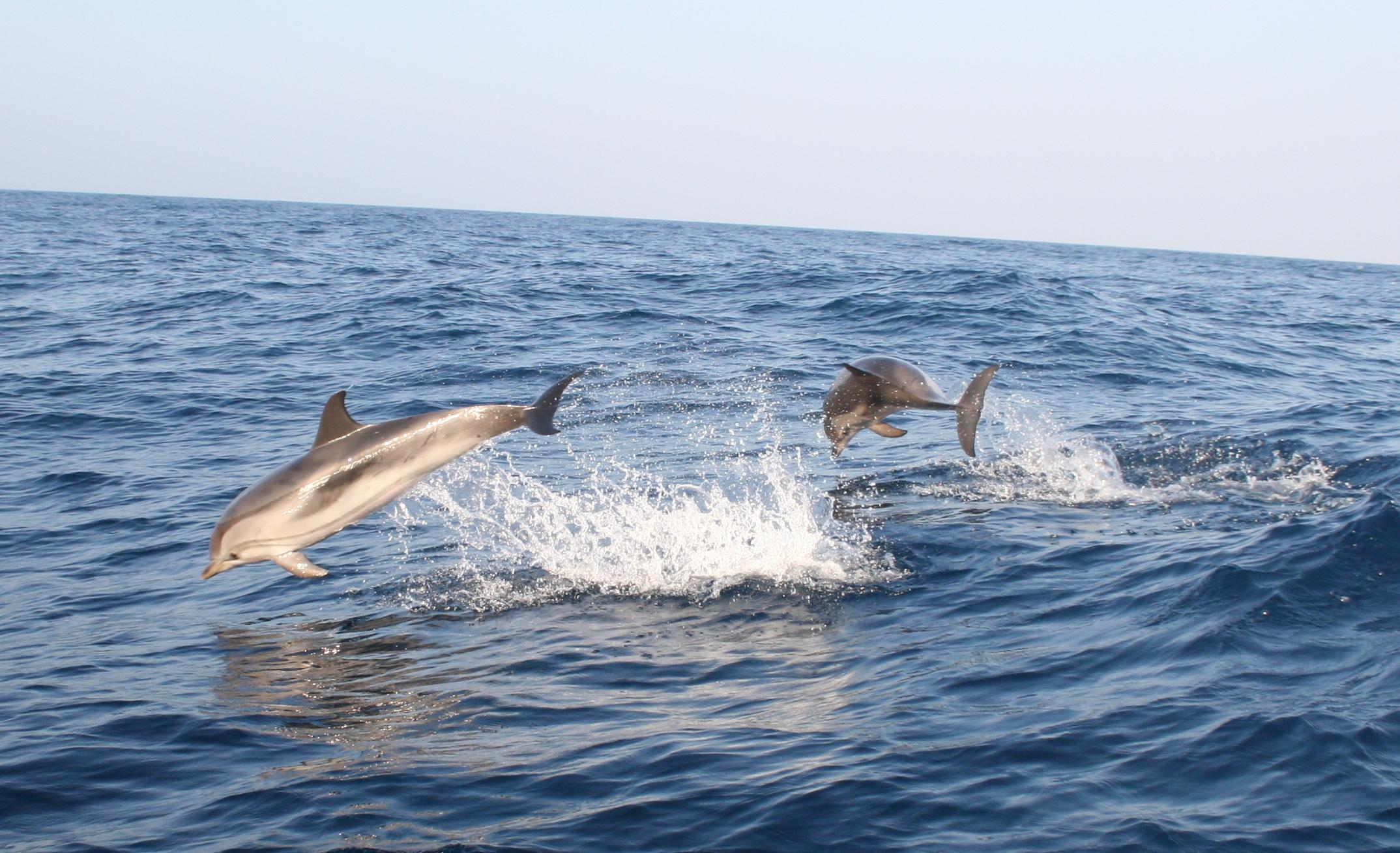 Delfiner-Lycka