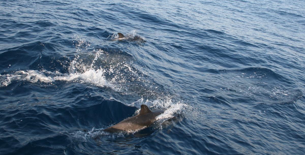 Delfinmöten