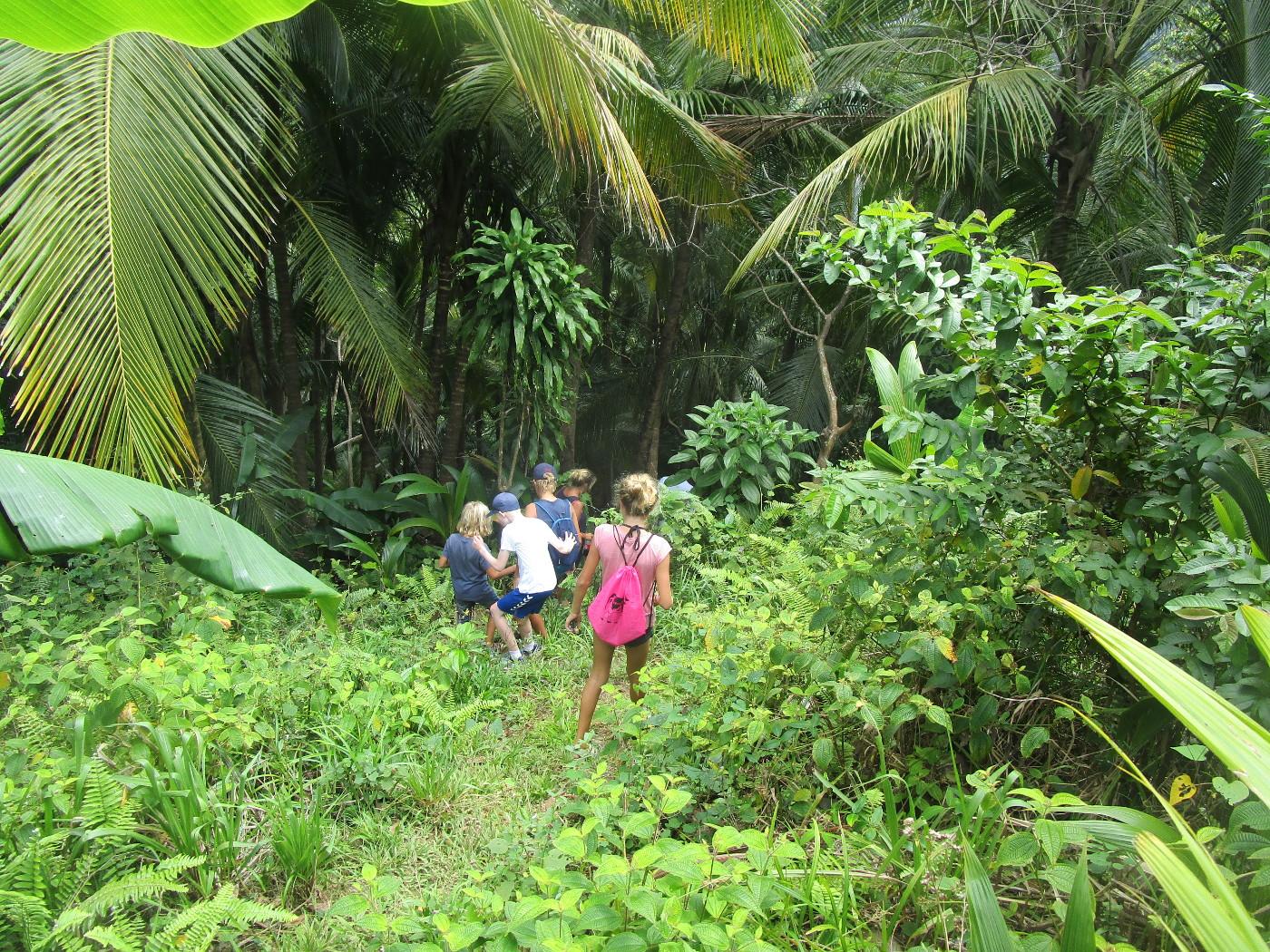 Vandring rakt in i regnskogen