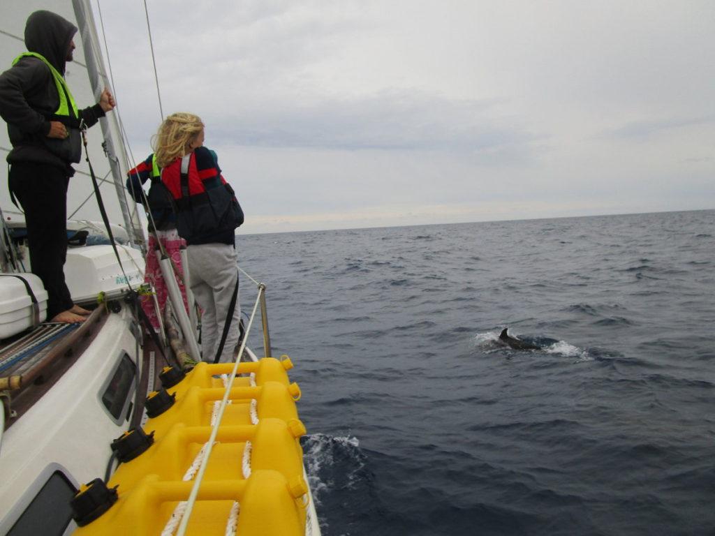 Besök av delfiner