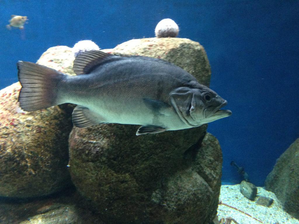 Akvarie 2