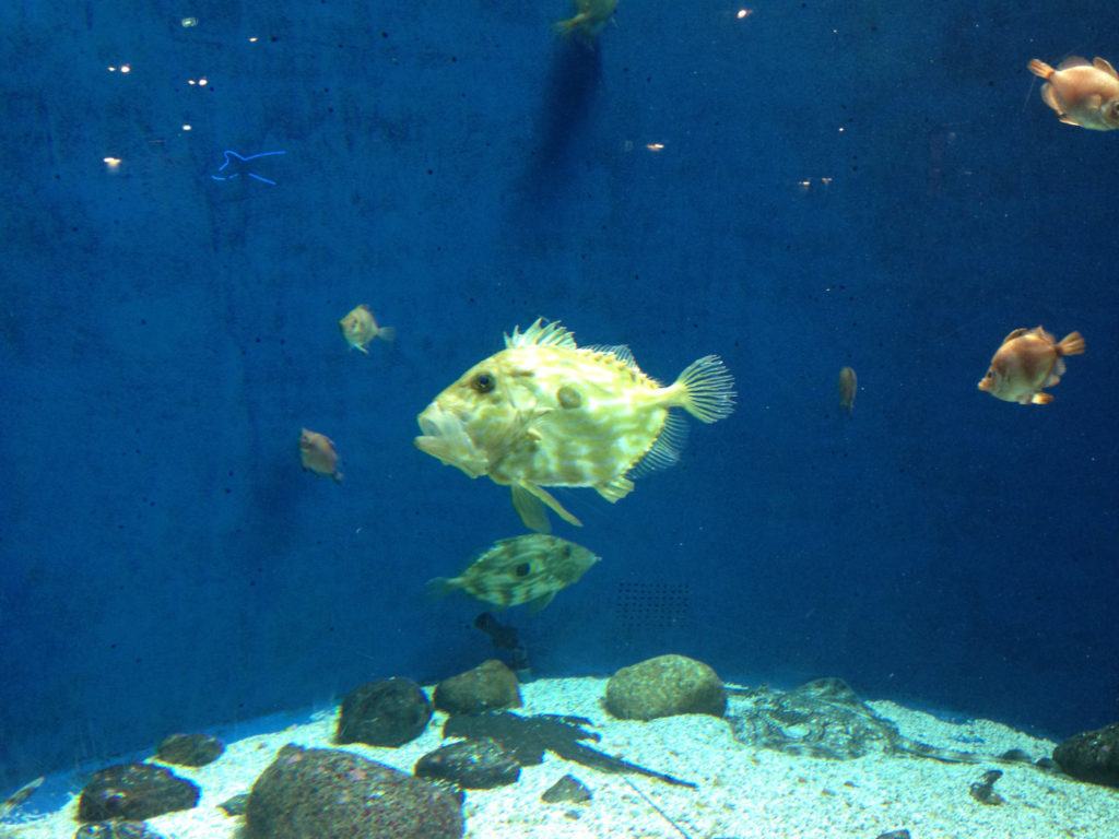 Akvariebesök med massor av fakta vilket passar vår Troels perfekt